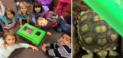 We-Are-Turtle-Friends-2photos
