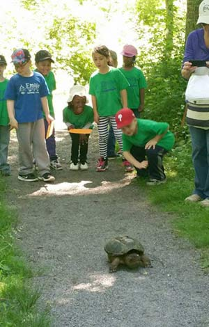 summer-camp-Watching-Turtle-Walk